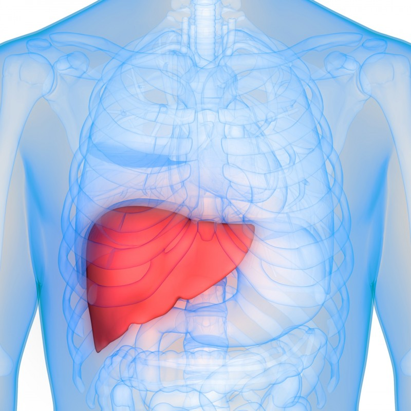 Liver Basics Hep